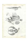 Seal  1863-79