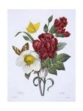 Ellebore Et Oeillet  from 'Choix Des Plus Belles Fleurs'  Published Paris  1829