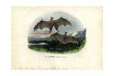 Spectral Bat  1863-79
