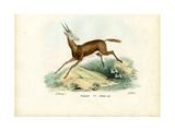 Oryx  1863-79