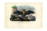 Common Pipistrelle  1863-79