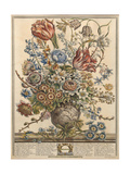 March  from 'Twelve Months of Flowers' by Robert Furber (C1674-1756) Engraved by Henry Fletcher