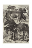 Prize Horses and Cattle at the Oxford Meeting of the Royal Agricultural Society