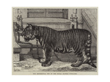 The Regimental Pet of the Royal Madras Fusiliers