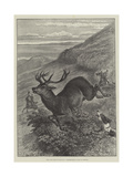 The Wild West of England  Unharbouring a Stag on Exmoor