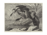 The Darter and Stilt Plover in the Zoological Society's Gardens
