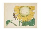 Grasshopper and Sunflower  C 1877