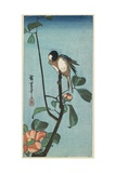 Titmouse on Camelia  1830-1858
