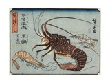 Lobster  Prawn and Shrimps  1830-1844
