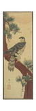 Hawk on Pine Branch  Summer  September 1853
