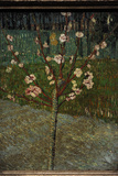 Almond Tree in Bloom  1888