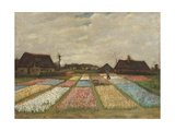 Flower Beds in Holland  C1883