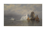 Whaler and Fishing Vessels Near the Coast of Labrador  C1880