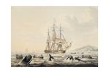 Whaling in South Seas  by William John Huggins (1781-1845)  44X57 Cm  19th Century