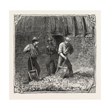 Hops and Hop Pickers  in a Kentish Hop Garden  Kent  England  Turning Hops in the Kiln  1876  Uk
