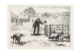 The Collie Dog Trials at the Alexandra Palace  Penning the Sheep  1876  Uk
