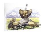 Birds: Falconiformes  Eurasian Griffon Vulture  (Gyps Fulvus) Feeding on Dead Animal