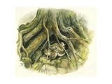 Birds: Passeriformes  Winter Wrens (Troglodytes Troglodytes) Hollow of Tree Trunk