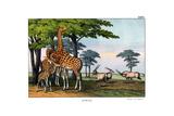 Oryx  1860