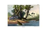 Warthog  1860