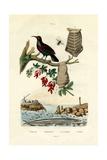 Bird of Paradise  1833-39