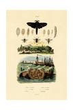 Dark Giant Horsefly  1833-39