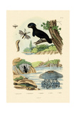 Flying Gurnard  1833-39