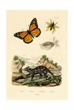Butterfly  1833-39