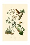 Poison Hemlock  1833-39