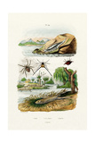 Naked Sea Slug  1833-39