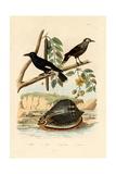 Snail  1833-39