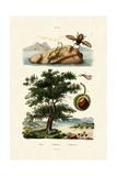 Bait Bug  1833-39