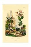 Goats  1833-39