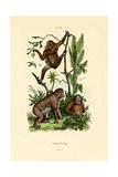 Orangutan  1833-39