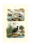 Moss Animal  1833-39