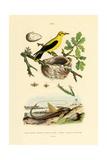 Pine Sawfly  1833-39