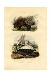 Porcupine  1833-39