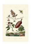 Sawfly  1833-39