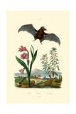 Gladiolus  1833-39