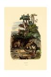 Red Fox  1833-39