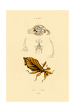 Leaf Insect  1833-39