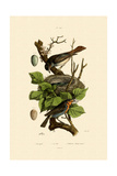 Nightingale  1833-39