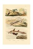 Squid  1833-39