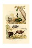 Boa  1833-39