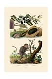 Abalone  1833-39