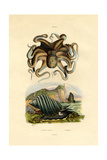 Octopus  1833-39