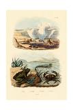 Crab  1833-39