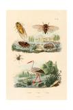 Firefly  1833-39
