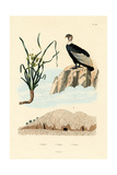 Vulture  1833-39