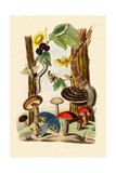 Mushrooms  1833-39